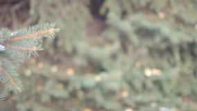 Ramas del árbol en parque del invierno almacen de metraje de vídeo