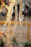 Ramas del abedul cubiertas con hielo Imagenes de archivo