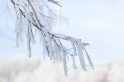 Ramas del abedul cubiertas con nieve con helada Fotografía de archivo libre de regalías