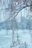 Ramas del abedul en el parque del invierno imagenes de archivo