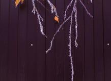 Ramas del abedul en fondo de la oscuridad de la escarcha Foto de archivo libre de regalías