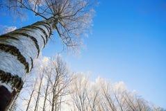 Ramas del abedul en helada contra el cielo Fotografía de archivo