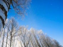 Ramas del abedul en helada contra el cielo Foto de archivo libre de regalías