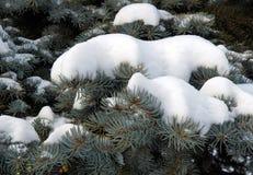 Ramas del abeto debajo de la nieve Fotografía de archivo