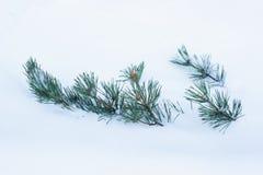 Ramas del abeto en la nieve fotos de archivo