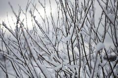 Ramas del arbustos Fotografía de archivo libre de regalías