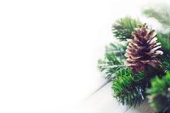 Ramas del cono y de árbol del pino en el fondo blanco Fotografía de archivo