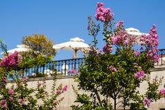 ramas del florescence de los flovers violetas en el sol. fotografía de archivo libre de regalías