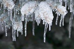 Ramas del invierno en hielo Fotografía de archivo
