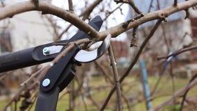 Ramas del manzano de la poda del jardinero en abril con las tijeras de podar metrajes