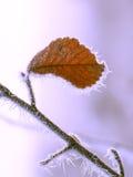 Ramas del otoño con escarcha y la hoja amarilla Fotos de archivo