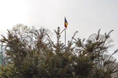 Ramas del pino Imagen de archivo