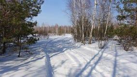 Ramas del pino contra el cielo azul Fotografía de archivo