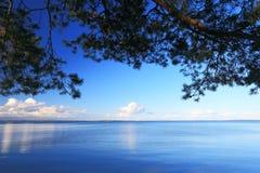 Ramas del pino en fondo del cielo azul Fotos de archivo