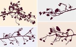 Ramas del árbol de serbal Foto de archivo
