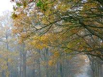 Ramas del roble en colores del otoño imagen de archivo