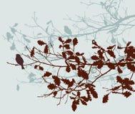Ramas del roble en el otoño Foto de archivo