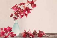 Ramas del Viburnum en florero Fotos de archivo libres de regalías