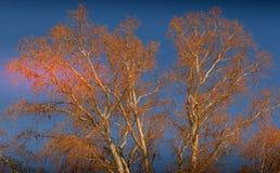 Ramas deshojadas de un árbol contra un cielo frío del invierno Imagen de archivo