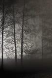 Ramas deshojadas desnudas iluminadas, Misty Trees Silhouettes, pared de piedra negra, escena al aire libre de la noche del Lit br Imágenes de archivo libres de regalías