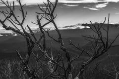 Ramas desnudas contra las montañas y el cielo nublado Foto de archivo