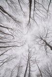 Ramas desnudas de árboles en el bosque del invierno Foto de archivo