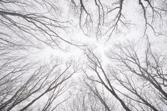 Ramas desnudas de árboles en el bosque del invierno Imagen de archivo
