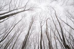 Ramas desnudas de árboles en el bosque del invierno Imagenes de archivo