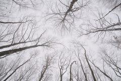 Ramas desnudas de árboles en el bosque del invierno Foto de archivo libre de regalías