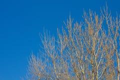 Ramas desnudas de un árbol contra cierre del cielo azul para arriba Foto de archivo libre de regalías