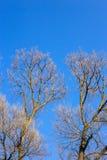 Ramas desnudas de un árbol contra el cielo azul Fotografía de archivo
