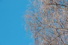 Ramas desnudas de un árbol contra el cielo azul Foto de archivo