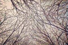 Ramas desnudas de un árbol contra el cielo azul Foto de archivo libre de regalías
