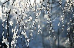 Ramas elegantes del abedul cubiertas con los cristales de hielo brillantes en el b Fotos de archivo libres de regalías