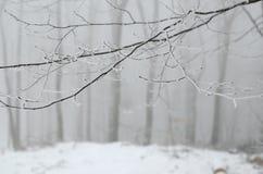 Ramas en día de niebla Fotos de archivo