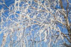Ramas en la helada en el sol Imagen de archivo