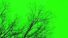 Ramas en la pantalla verde
