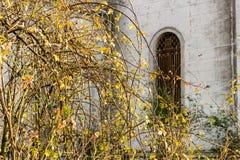 Ramas en la ventana de la iglesia del siglo del italiano XVII Imágenes de archivo libres de regalías