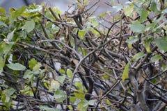 Ramas en otoño Foto de archivo