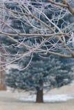Ramas escarchadas en árbol Imagen de archivo libre de regalías