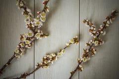 Ramas florecidas del albaricoque en un fondo de madera fotos de archivo libres de regalías