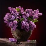 Ramas florecientes de la lila Imágenes de archivo libres de regalías