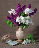 Ramas florecientes de la lila en florero y dólares Imagenes de archivo