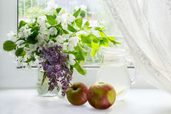 Ramas florecientes de la manzana, de manzanas y de la compota de la manzana fotos de archivo libres de regalías