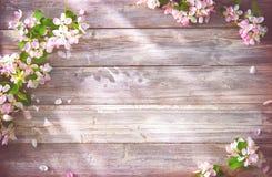 Ramas florecientes de la primavera en fondo de madera Fotografía de archivo libre de regalías