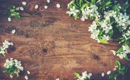Ramas florecientes de la primavera en fondo de madera Foto de archivo