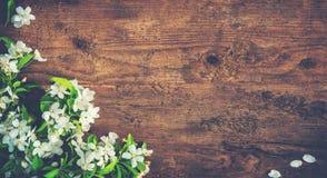 Ramas florecientes de la primavera en fondo de madera Imagenes de archivo