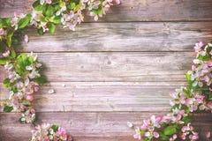 Ramas florecientes de la primavera en fondo de madera Imagen de archivo libre de regalías