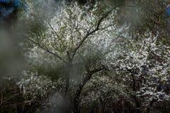 Ramas florecientes de un árbol imagen de archivo
