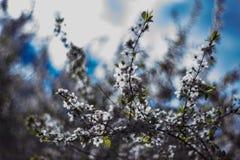 Ramas florecientes de un árbol fotos de archivo